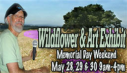 Idyllwild Wildflower Exhibit